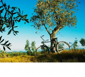 Discover the Famous Italian Countryside